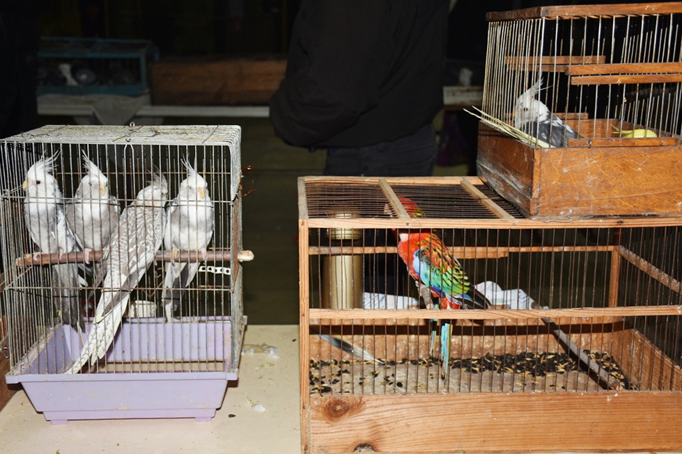 Заводчики голубей из России, Белоруссии, ДНР и ЛНР приняли участие в выставке в Красном Луче 5