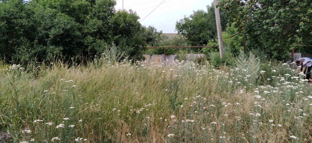 В Краснодоне активисты ОД «Мир Луганщине» покосили и убрали траву возле дома пенсионера 1