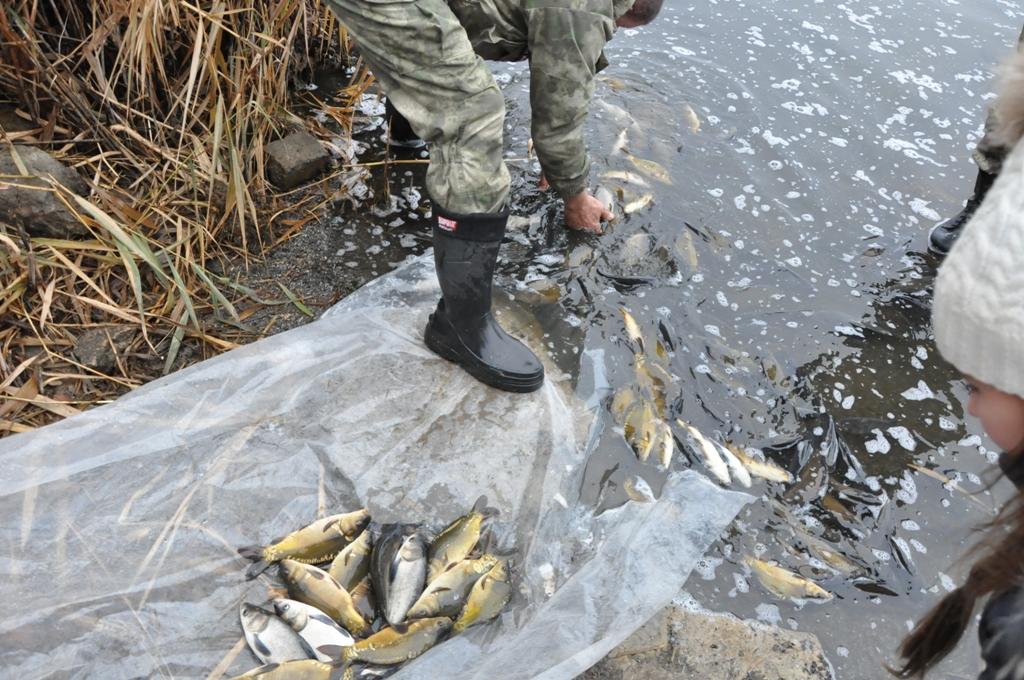Активисты ОД «Мир Луганщине» приняли участие в зарыблении пруда в городе Алмазная