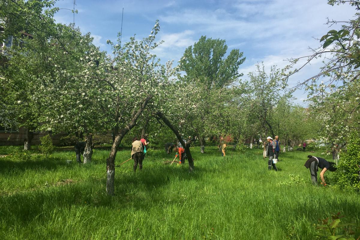 Активисты ОД «Мир Луганщине» провели акцию «Яблоневый сад» в Молодогвардейске